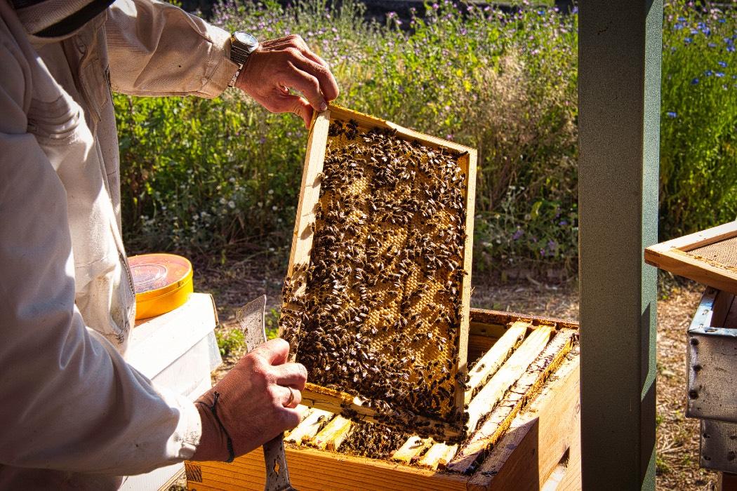 Curso iniciación a la apicultura