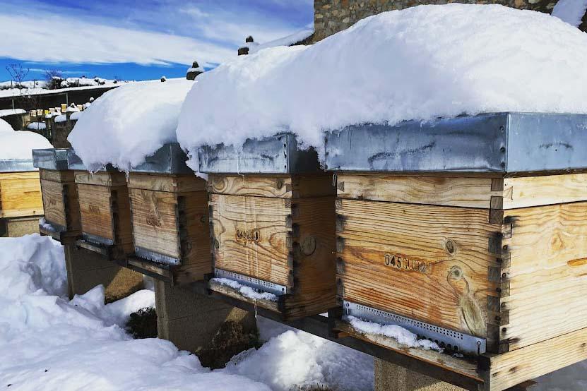 Curso anual de apicultura