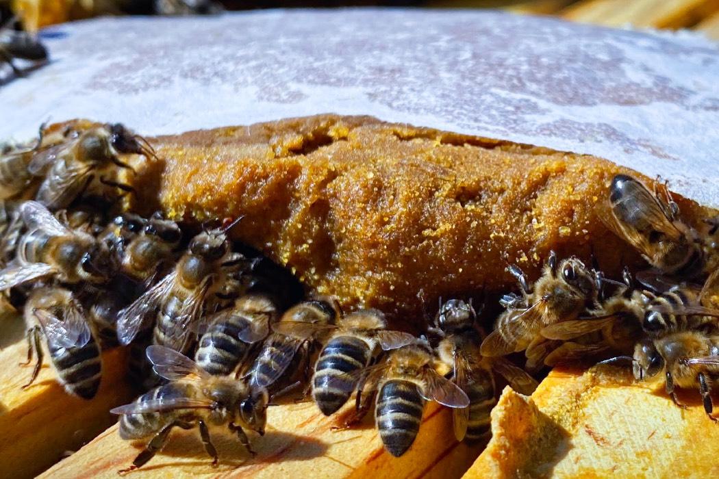 Curso avanzado de apicultura